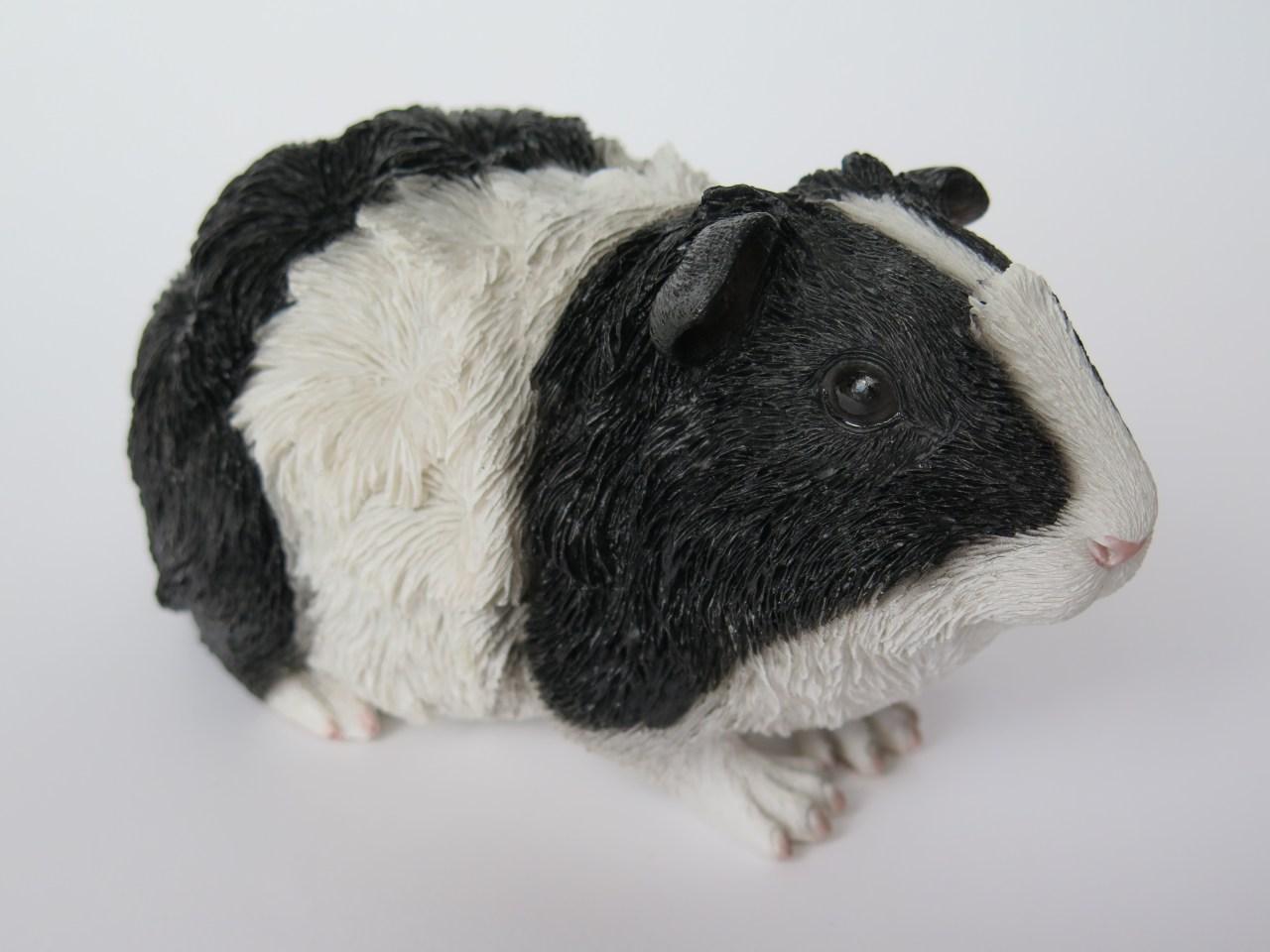 Meerschweinchenurne Schwarz-weiß Rosette