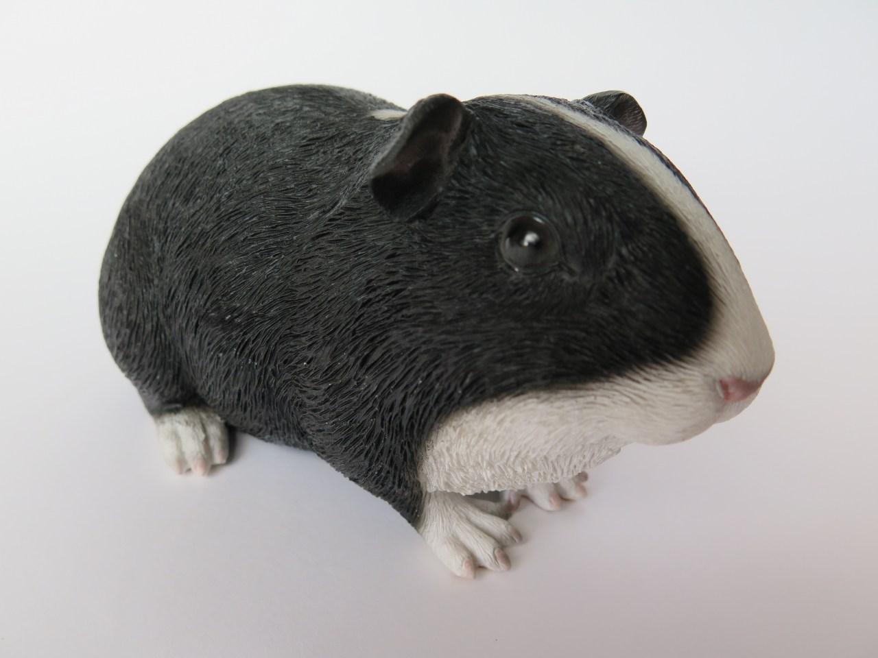 Meerschweinchenurne Schwarz-weiß
